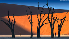 Man and devils (Jirawatfoto) Tags: namibia deadvlei sossusvlei dead africa park national camelthorn vlei red desert travel sand blue dune sky namib natural landscape tourism scenery famous african dry clay sunlight pan acacia beautiful trees namibnaukluft naukluft nature tree orange outdoor day arid