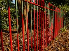 [223] Fence (rbrwr) Tags: uk england bristol standrews standrewspark park fence red green