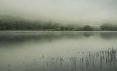 Mist and Reeds - Loch Eck July 2017 (GOR44Photographic@Gmail.com) Tags: mist loch eck reeds house water reflection trees gor44 scotland argyll cowal pentax k50 1645mmf4