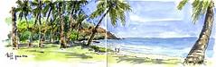 Grande-Anse (P h i l de couleur) Tags: aquarelle encre reunionisland reunion tropical plage beach cocotier coconut sketch watercolor croquis végétation