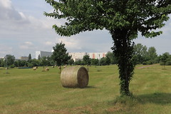 Erntezeit wie auf dem Land (julia_HalleFotoFan) Tags: hallesaale halleneustadt erntezeit