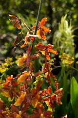IMG_1810 (d_propp) Tags: muttartconservatory edmonton yegphotos yeggers flower flowers summer 2017