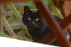 Edgar <3 (eddcellentcats) Tags: cat cats kitty kittycat nikon d750 sigma sigmalens eddcellentedgar