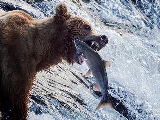 Fishing...Alaska style