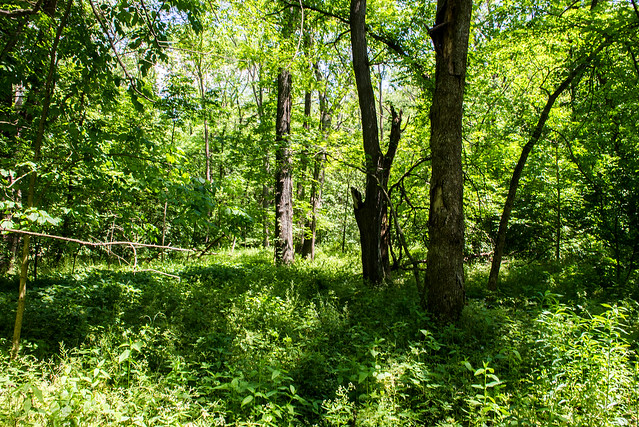 Asherwood Nature Preserve - June 5, 2017