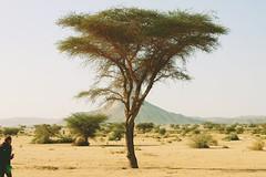Tamanrasset  Algeria (babinou00) Tags: walking alone algeria tamanrasset sahara hoggar mountains