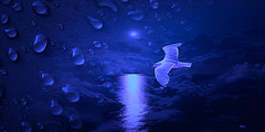 Fly to the moonlight (claudiadea131) Tags: moon gull waterdrops