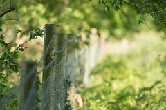 HFF (jillyspoon) Tags: hff harrogate happyfencefriday fence fencefriday wood posts barbedwire wild outdors canon canon70d 70d 70200mm ef70200 70200 bokeh depthoffield niddgorge distance