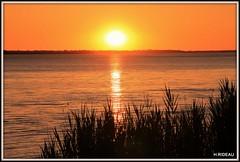 Sunset (Les photos de LN) Tags: sunset estuaire gironde garonne aquitaine fleuve nature soirdété couleurs reflets roseaux