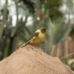 Scouting for the Next Meal 06222017 (Orange Barn) Tags: thedomes mitchellparkdomes milwaukeewisconsin bird perched rock