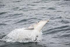 Les curieux (Fabien Serres) Tags: cétacés granddauphin tursiopstruncatus