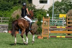 A9903486_s (AndiP66) Tags: springen langenthal bern 2017 juni june 3juni2017 pferd horse schweiz switzerland kantonbern cantonofbern concours wettbewerb horsejumping springreiten pferdespringen equestrian sports pferdesport sport martinameyer grueb mauensee luzern nevada sony alpha sonyalpha 99markii 99ii 99m2 a99ii ilca99m2 slta99ii sony70400mm f456 sony70400mmf456gssmii sal70400g2 amount andreaspeters pfingstspringen
