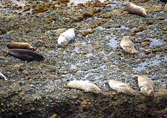Siesta-DSC_1010 (nokhum.markushevich) Tags: nature animals pointlobos pacificocean california
