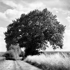 mamiya247 (salparadise666) Tags: mamiya c330 sekor super fuji neopan acros caffenol rs 15min nils volkmer vintage camera medium format square 6x6 landscape nature longtime exposure 4sec hannover region niedersachsen germany monochrome bw black white view 180mm