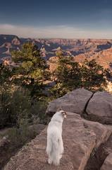 6/12 Nadja at the Grand Canyon (utski7) Tags: goldenhour studio26 grandcanyon visit pet dog travel sunset 12monthsfordogs2017