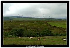 Woolies and Windmills (Oul Gundog) Tags: woolies windmills technology slievenaorra co antrim northern ireland ulster