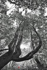 D 3 (kadriraj.me) Tags: vrbovsko primorskogoranska croatia hrv wwwkadrirajme nature priroda landscape pejzaž forest šuma blackwhite crnobijelo kamačnik nikon d3s nikkor 247028 kadrirajme fotoklubklik 2017 robertospudić
