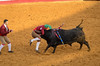 Forcados 518 (_Rjc9666_) Tags: alentejo bull bullfight estremoz forcados nikond5100 pega portugal tamrom70200f28 bullring ©ruijorge9666 évoradistrict pt 1810 518