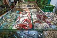 L1571777 (terencehonin) Tags: seafood hongkong fish tank life lobster clams shell shrimp prawn claw