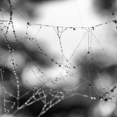 Spider Home (drasphotography) Tags: spider spinne net netz spinnennetz monochrome monochromatic monotone blackandwhite bw bianconero bn schwarzweis sw nature natura natur drasphotography nikon nikkor2470mmf28 makro macro rain regen wet nass piove abstract abstrakt