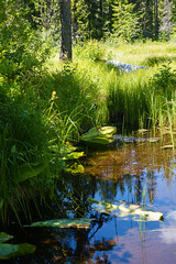 trillium lake family hike (dolanh) Tags: hiking mthoodwilderness oregon marsh trilliumlake