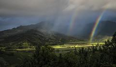 Hanalei Honey (Jeff Stamer (Firefallphotography.com)) Tags: firefallphotography firefallphotographycom jeffstamer hawaii kauai rainbow hanaleivalleylookout taro
