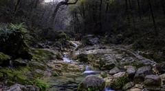 Magic forest (Humberto Rivera Ruiz) Tags: landscape forest water long exposure monterrey mexico trekking explore adventure