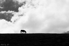 Cheval (stephane_p) Tags: 2015 espagne españa pentax spain blackandwhite blackwhite bw cheval contrejour horse monochrome nb noirblanc noiretblanc ombre pentaxart silhouette