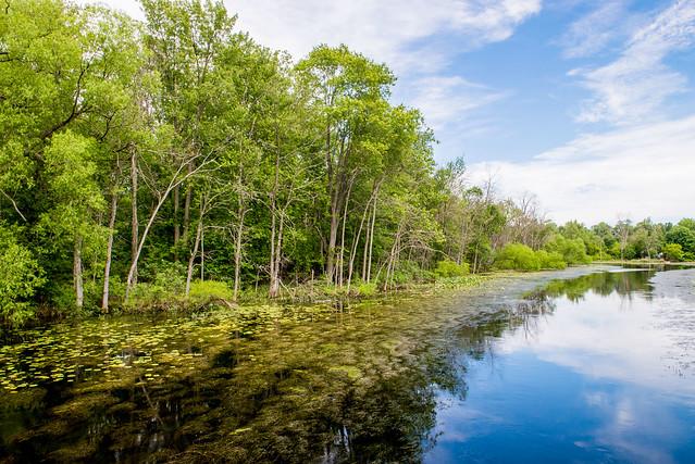 Art Hammer Wetlands - June 21, 2017