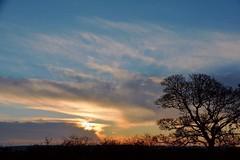 Sunrise at Kimberlow Hill, York. (Powderpuff GP) Tags: trees heslingtoneast ki york sunrise