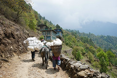 Himalayian Nepali Life (Lenny K Photography) Tags: everest base camp trek lukla airport mountain ebc sagarmatha national park nepal trekking walking sky cloud sony a7 2870mm hardship mountainside mountains rocky greenery green carrying groceries goods landscape scenic things do