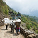 Himalayian Nepali Life
