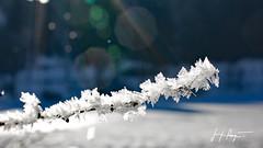 Bourgeons givrés  - Jura / D60_8999 (P Jacque) Tags: jura nature neige blanc hiver glace givre froid soleil ciel arbre plante branche gelée cristaux franchecomté
