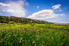 Marsh and Hills of the Radke Martinez Regional Shoreline - Contra Costa County, California USA (luqmac) Tags: darrylmcelroy luqman magicmediaproduction martinezregionalshoreline ebrpd eastbayregionalparkdistrict urbanlandscape nikond300 martinezca clouds shack cityofmartinez arroyodelhambre alhambracreek radkemartinezregionalshorel grangerwharf ebparks california usa