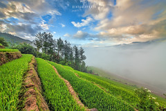 _U1H0844-La Pan Tan,Mu Cang Chai,Yen Bai 0617 (HUONGBEO PHOTO) Tags: sigma1224mm canoneos1dsmark3 ruộnglúa tâybắc yênbái mùcangchải laochải asian northwestvietnam peaceful photography vietnamlandscape vietnamscenery scenery countryside colorful clouds riceterraces ricefield paddyfield pinetree sunrise bluesky landscape outdoor