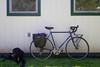 DSCF6019 (aaroncaley) Tags: dog bicycle miyata