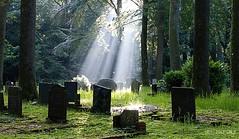 Light from above (Greet N.) Tags: light sunbeams trees graveyard old sunrise morning