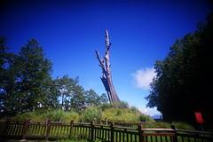 DSC07844 (rc90459) Tags: 最後的夫妻樹 夫妻樹 塔塔加 玉山