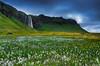 Seljalandsfoss spring (snowyturner) Tags: iceland waterfall foss flowers volcanic landscape sky spring