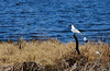 Hettemåke ved Østensjøvannet (KOKONIS) Tags: hettemåke østensjøvannet bird seagull nikon d300s europe europa norway norge