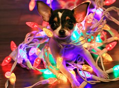 A Tangled Mess (Cindy's Here) Tags: atangledmess peanut christmaslights canon ansh scavenger7 241365 light 52in2017challenge 35
