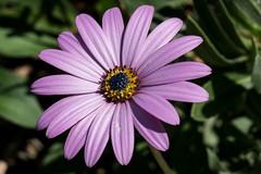 Herrenhäuser Gärten (Benjamin Vasterling) Tags: herrenhäusergärten garten pflanze bume flower garden