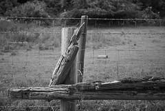 The old a new fence [BW] (Modesto Vega) Tags: nikon nikond600 d600 fullframe monochrome blackandwhite blancoynegro schwarzundweiss noiretblanc monocromo bw biancoenero fence wire barbedwire wood weatheredwood