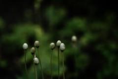 *** (pszcz9) Tags: przyroda nature natura bokeh zbliżenie closeup beautifulearth sony a77