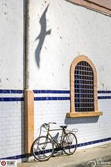 Bike and Seagull's Shadow (Alesfra) Tags: alesfra alesfrafotografia alesfraphotography alesfracom em1 foto marrakech marruecos mirrorless morocco olympus olympusem1 olympusomdem1 omd photo sinespejo wwwalesfracom bike bicicleta shadow bird window ventana essaouira africa albertojespiñeirafrancés seagull gaviota wheel rueda tamron14150mmf3558diiii wing ala port puerto coast costa white blanco azul blue wall muro pared bicycle composition composición light luz line linea azulejo tile