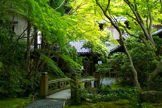青もみじ - 瑠璃光院 / Rurikou-in Komyo-ji Temple
