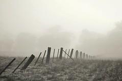 Frosty and foggy (holly hop) Tags: fencefriday fence farmfence paddock farm foggy winter emu australia fog abctvweather centralvictoria
