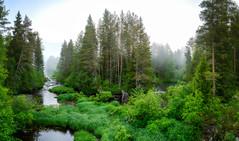 River Olhavanjoki morning fog (M.T.L Photography) Tags: riverolhavamorningfog water river fog night bright sunrise mikkoleinonencom mtlphotography nikond810 landscapepanorama summernightinfinland trees green