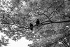 I Think I Recognize Your Face (Jesús Simeón) Tags: kyoto yoyogikoen yoyogipark shibuyaku tōkyōto blackandwhite blackwhite crows monochrome streetphotography park