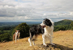 6/12 Barney at the Summit (meg price) Tags: 12monthsfordogs17 barney border collie bordercollie dogs